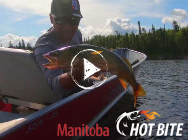 Hot Bite Manitoba summer fishing video